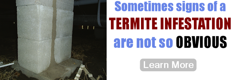Termite Infestation Signs